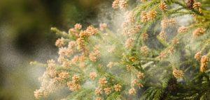 花粉の飛散