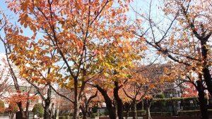 大阪府八尾市桜ヶ丘の桜ヶ丘公園